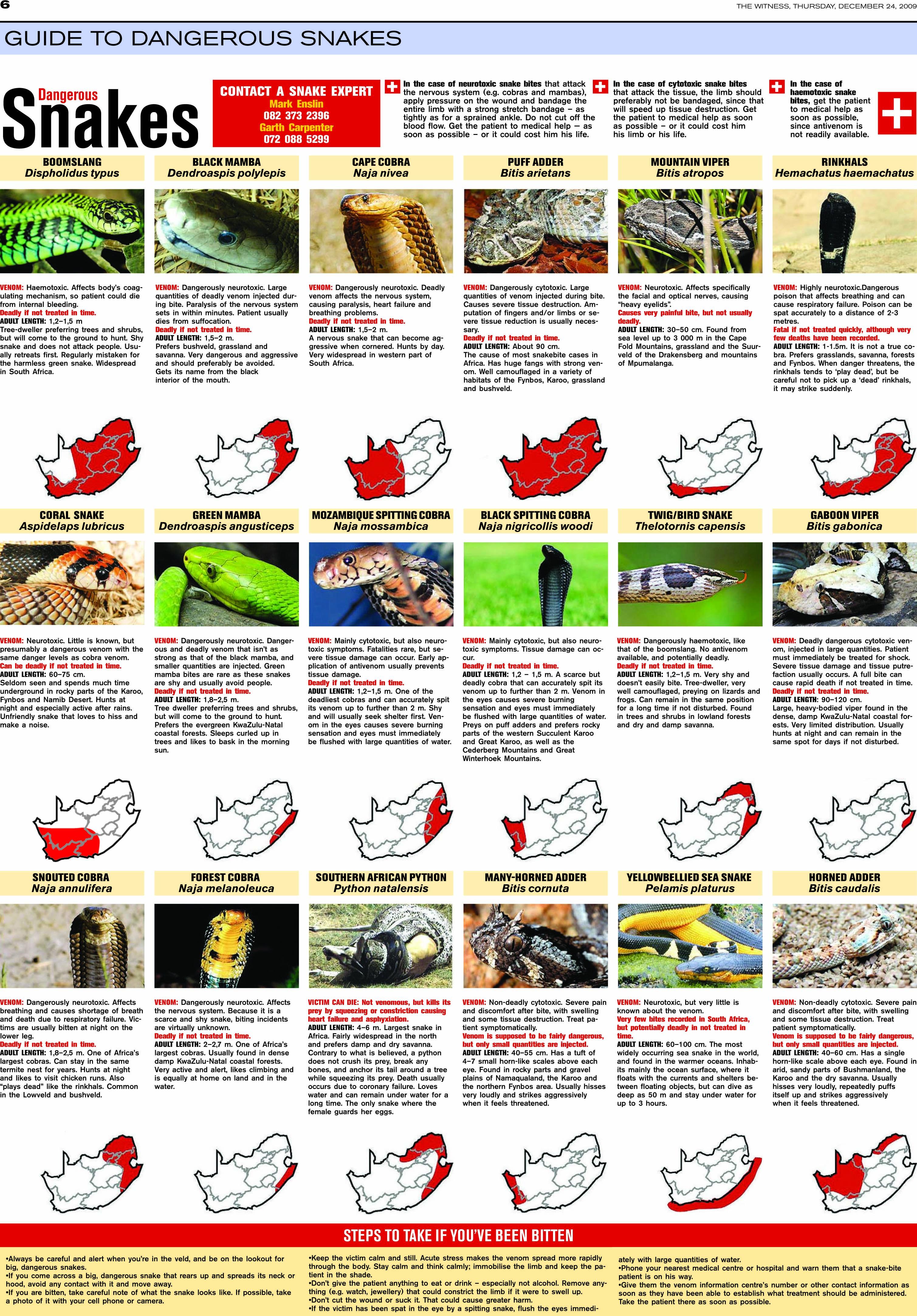 dangerous snakes and snakebite